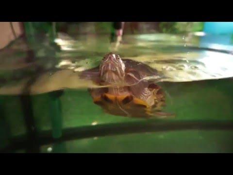 """Фильм """"Один день из жизни красноухой черепахи""""/The Film """"One Day In The Life Of The  Turtle"""""""