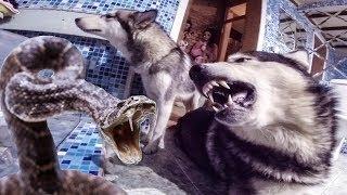 собака защищает щенка от змеи / dog protects puppy from snake