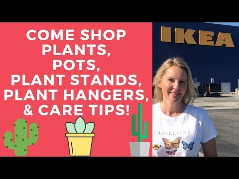 come shop IKEA plants, pots, plants stands, plant hangers with MOODY BLOOMS
