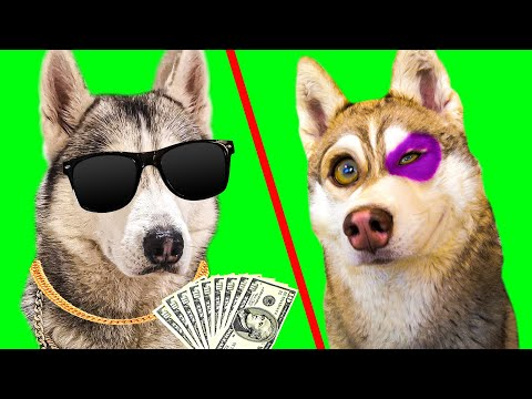БОГАТЫЙ ХАСКИ VS БЕДНЫЙ ХАСКИ. КАЖДЫЙ ХАСКИ ТАКОЙ (Хаски Бублик) Говорящая собака Mister Booble