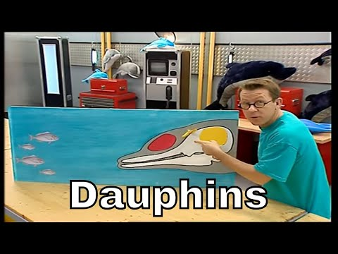 Comment le sonar du dauphin fonctionne-t-il ? - C'est Pas Sorcier