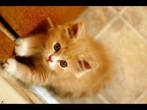 Funny Videos | Fanny Cats | Fanny Animals – NEW Videos 2014