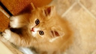 Funny Videos | Fanny Cats | Fanny Animals - NEW Videos 2014