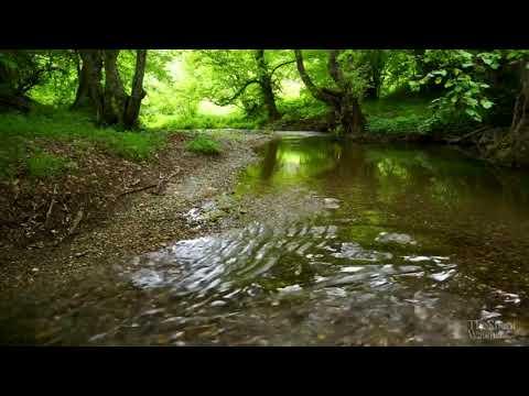 музыка для сна, шум воды, звуки леса, релакс