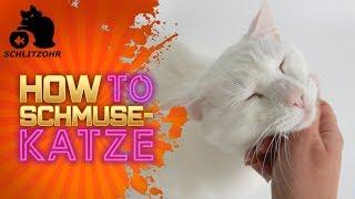 🔥How to Schmusekatze | Katze will nicht kuscheln? | Schmusekatze Transformation | Clickertraining