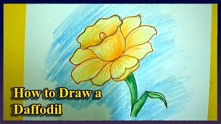 How to Draw a Daffodils Step by Step