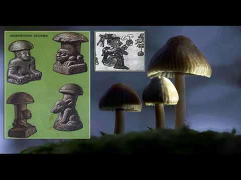 The Mushroom Unveiled 6/7