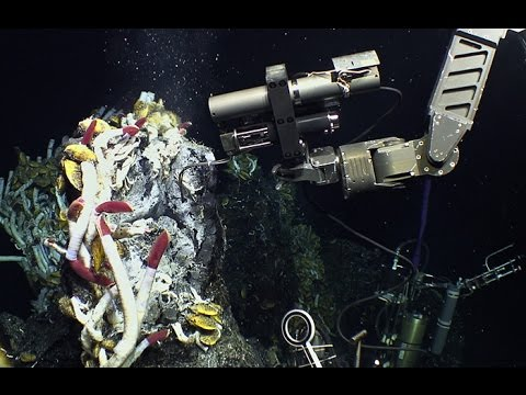 The Potential Uses of Deep Sea Microbes