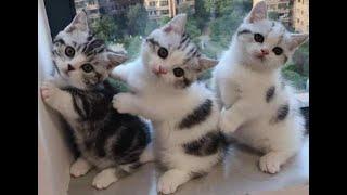 🐈 Веселые котята для хорошего настроения! 😸 Подборка приколов с котами и котятами! 💖💖💖