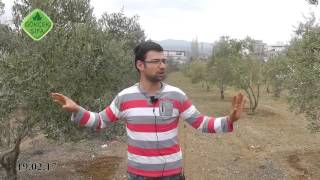 Ormus Tarım Zeytin'de Verim Artışı, Ormus Tarım ile Zeytin Fungusitine Son,