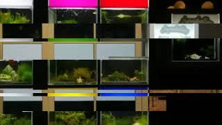 """Aquakallax - """"Licht an, Licht aus"""" war gestern! Bei der Pro-Blende heißt es """"Farbe an, Farbe aus"""""""