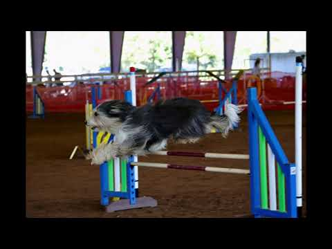 Bearded Collie Nationals 2019