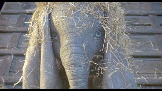 DUMBO (2019) Official Trailer - Disney Live Action Movie