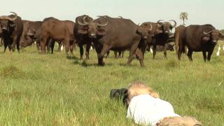 The Last Lions behind the scenes: Nature's sounds
