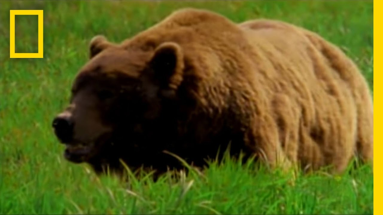 Man Fights Bear | National Geographic