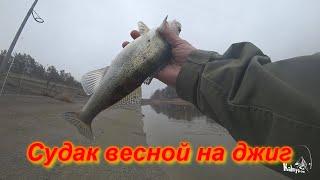 Ловля судака весной на джиг с берега Отпускать рыбу или