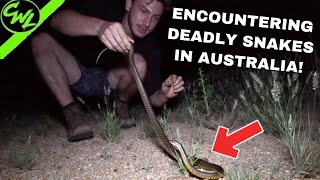ONE OF THE MOST DANGEROUS SNAKES IN AUSTRALIA!!!