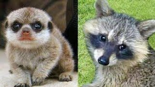 Cute Baby Animals-Funny Animals Compilation #8