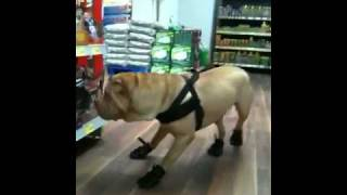 Dog Winter Shoes Shar Pei Breed