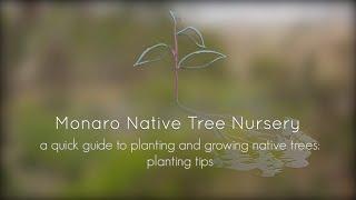 Monaro Native Tree Nursery - Planting Tips
