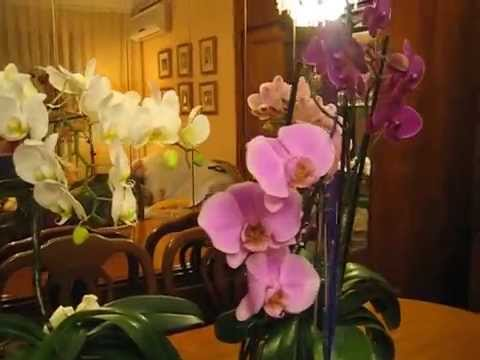 La Decoracion Con Orquideas Youtube