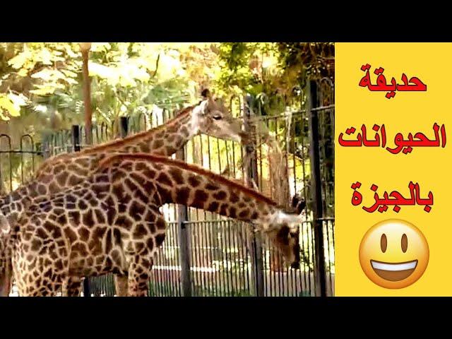 حديقة الحيوان المصرية بالجيزة، للاطفال، اصوات طبيعية، فيديو