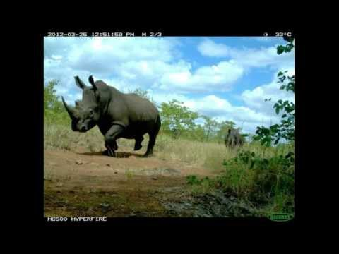 Rhinos and Elephants - a wild future?  Colin Bell describes the challenges facing theim