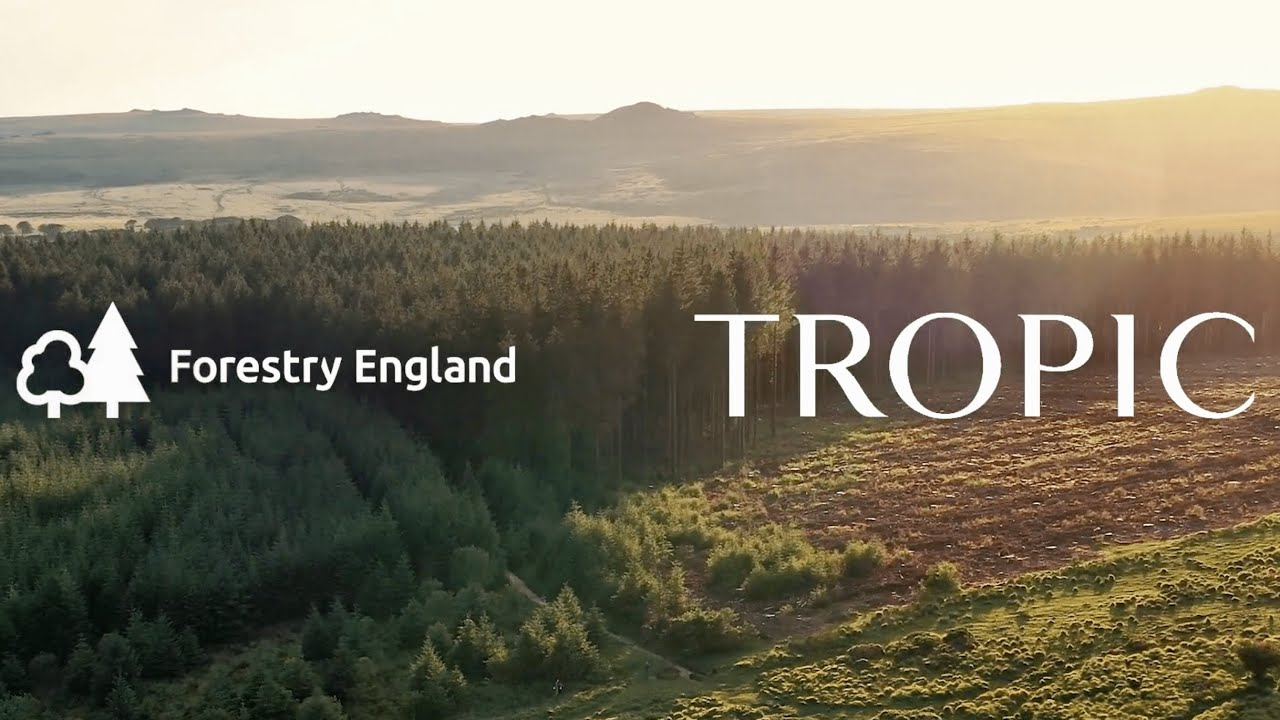 A Forest of Tropic Trees with Forestry England
