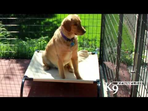 heavy-duty,-cozy-dog-cots-from-k9-kennel-store