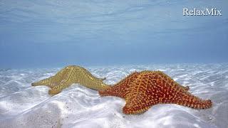 Эмбиент. Музыка для медитации /Ambient. Music for meditation