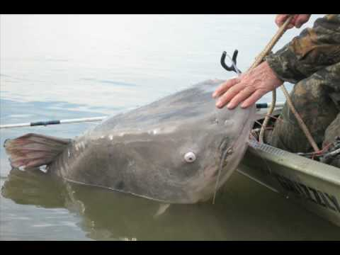 World record catfish bigger than the boat youtube sciox Image collections