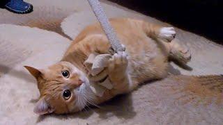 Super Cute Stealth Cat