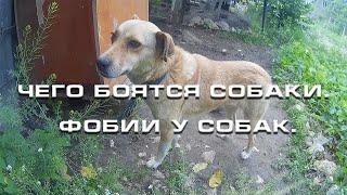 Чего боятся собаки  Фобии у собак