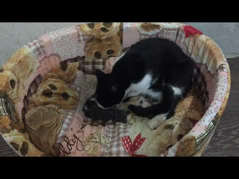 cat-gave-birth-to-kittens