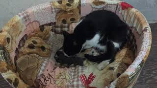 cat gave birth to kittens
