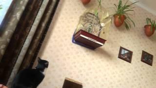 Кошки и попугаи. Кошка прыгает на клетку