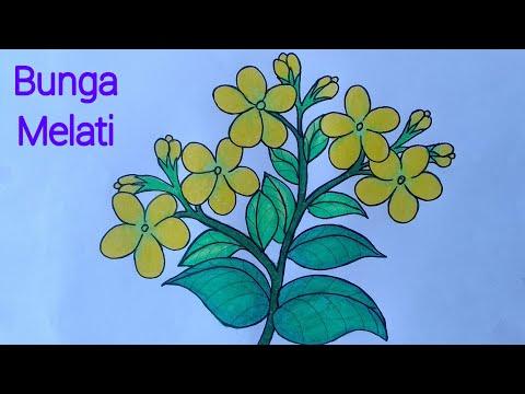 Cara Menggambar Bunga Melati Yang Mudah Menggambar Dan Mewarnai Bunga Melati Youtube