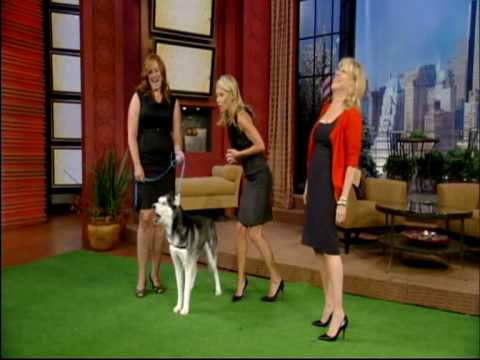 Mishka the Talking Husky Dog appears on TV!!!