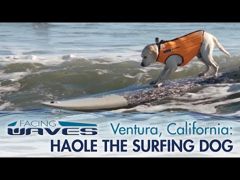 Surfing in Ventura, California with Haole the Surfing Dog
