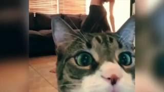 Девушки. Коты. И их косяки. Приколы 2016.