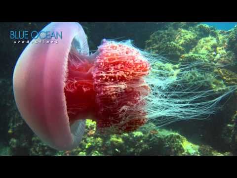 Come Dive With Jellyfish