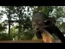 Baby Bearcat Walkabout - Cin..