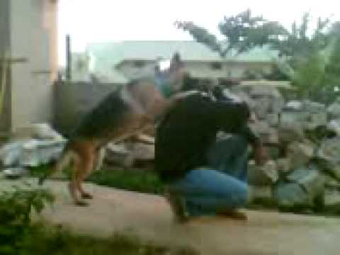 my self training my dog 2 (hemanth bangalore)