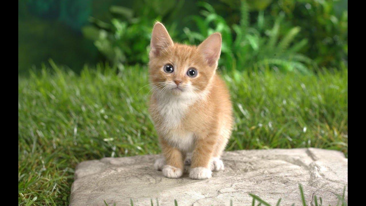 Домашние животные для детей. Голоса домашних животных ...