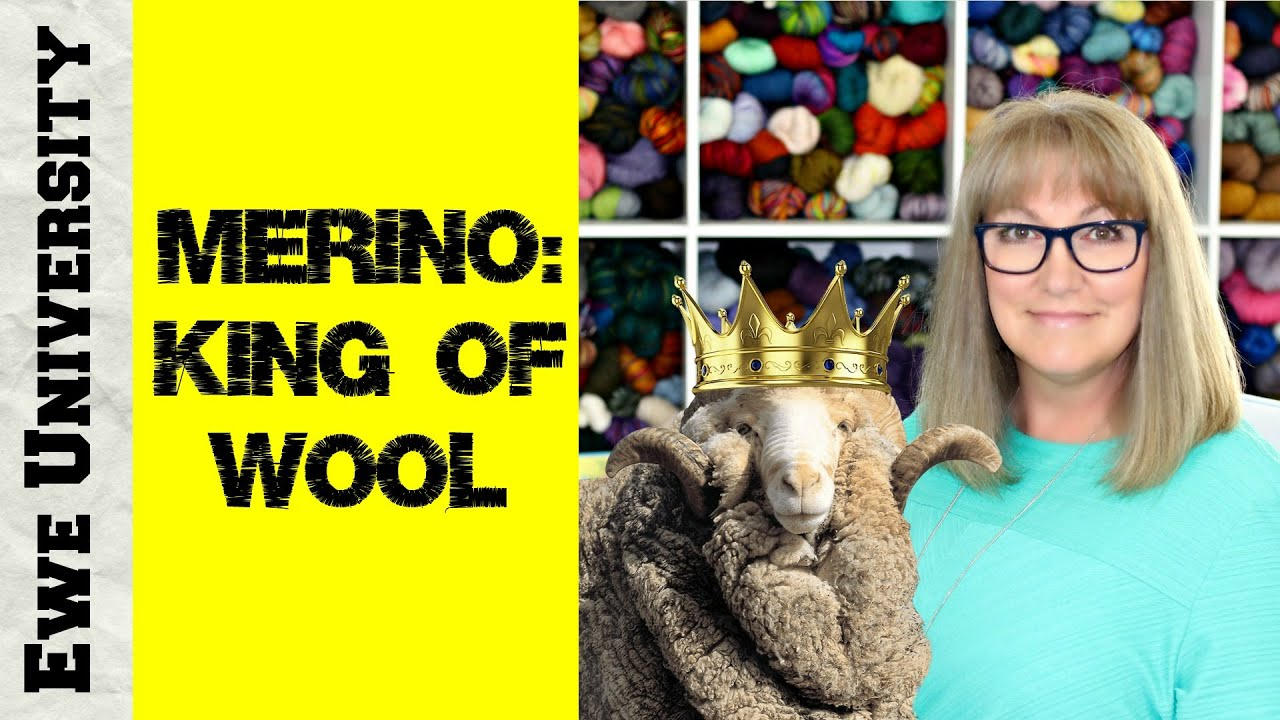 MERINO: KING OF WOOL || EWE UNIVERSITY