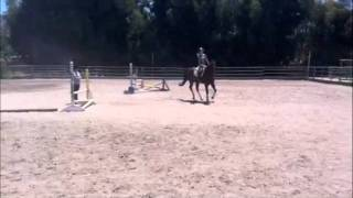 11 yr Thoroughbred gelding for sale Poway California