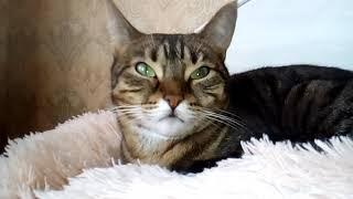 Информация от кошки Джусы
