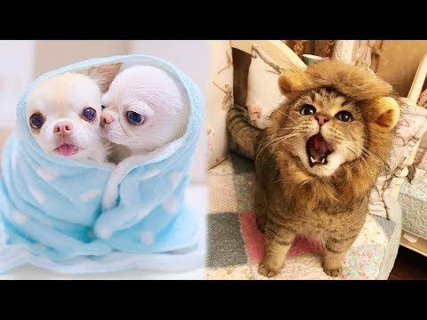 Cute baby animals Videos Compilation cute moment of the animals - Soo Cute! #89 Funny Viral Videos on VIRAL CHOP VIDEOS