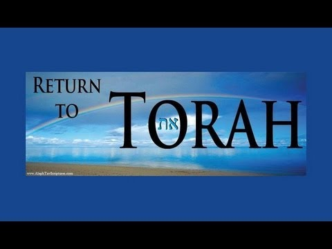 Torah the Tree of Life the Instructions