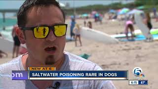 After dog dies in Tampa, North Palm Beach vet says fatal saltwater poisoning in dogs rare